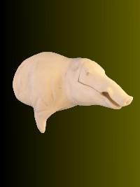 Wildschwein  Offset Nr:EH369L-S rechts  29-56-100